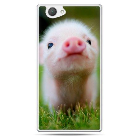 Xperia Z1 compact etui świnka