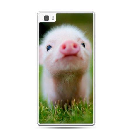 Huawei P8 Lite etui świnka