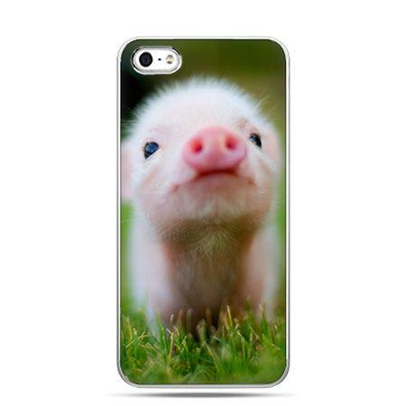 iPhone 5c etui świnka