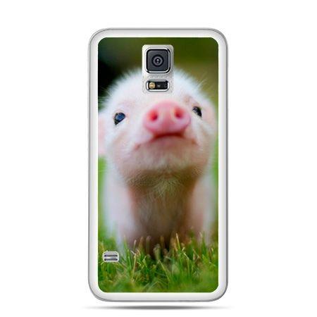Etui na Galaxy S5 świnka